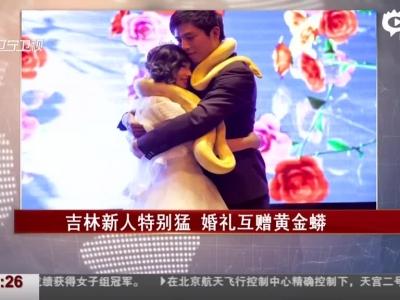 新人婚礼现场互赠黄金蟒作定情信物(图)
